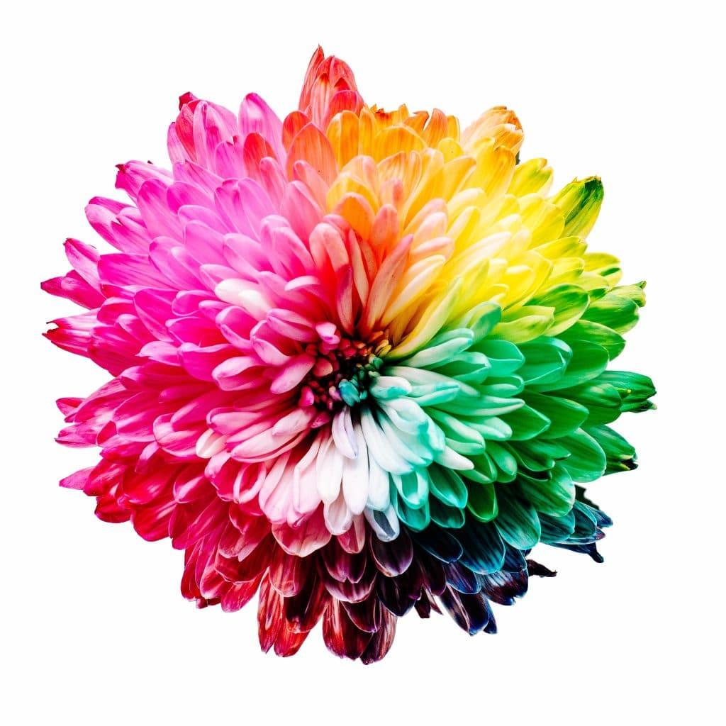 Panel de couleur sur une fleur